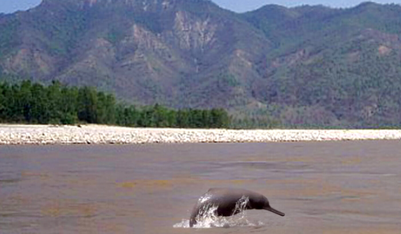 Dolphine in Kailali